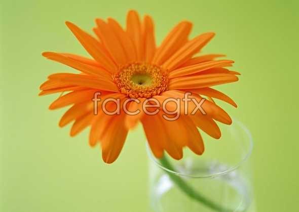 Flowers close-up 1364