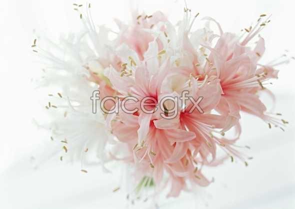 Flowers close-up 1463