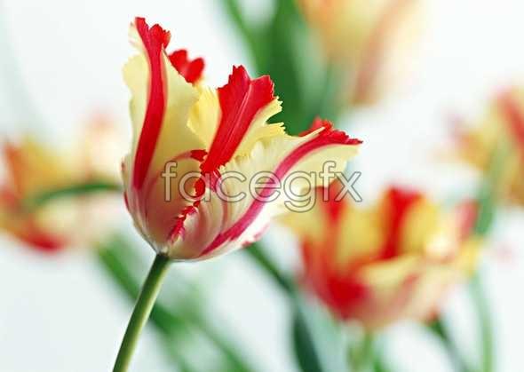 Flowers close-up 1498