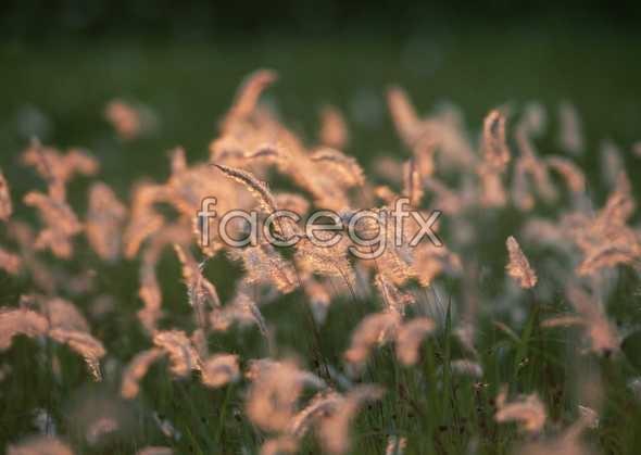 Flowers close-up 1607