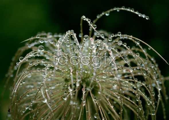 Flowers close-up 609