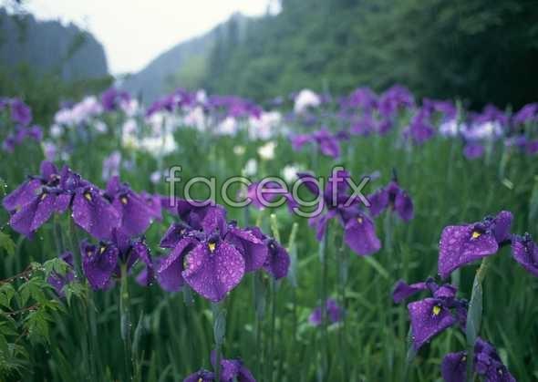 Flowers close-up 731