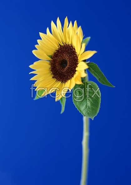 Flowers close-ups 1389