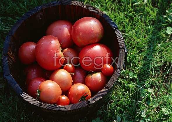 Fresh fruits and vegetables, 505