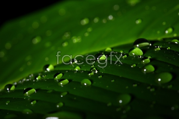 HD green leaves dew pictures