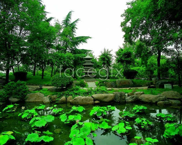 HD Park Lotus Leaf pictures
