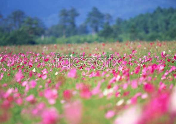 Thousands of flowers 657