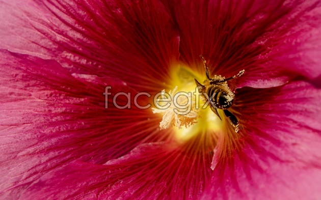 Flower bee pictures