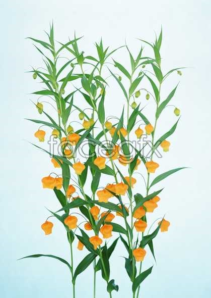 Flowers close-up 1813