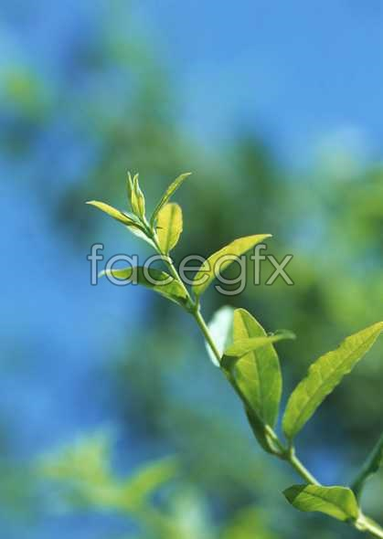 Flowers close-up 860