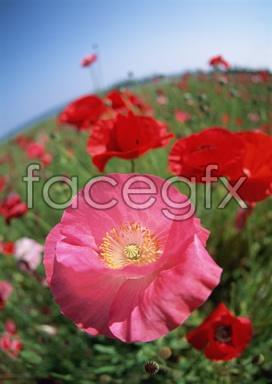 Flowers close-ups 2,068