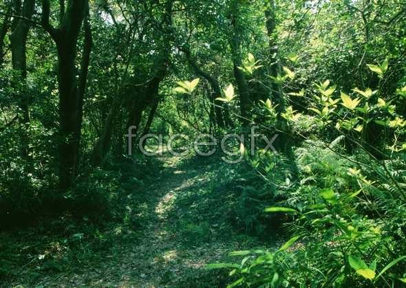 Jungle beauty of 175
