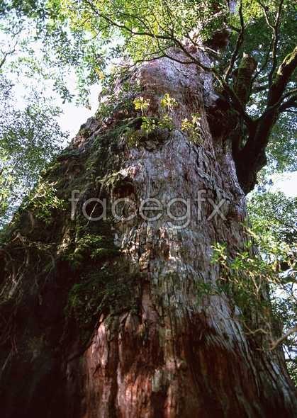 Jungle beauty of 347