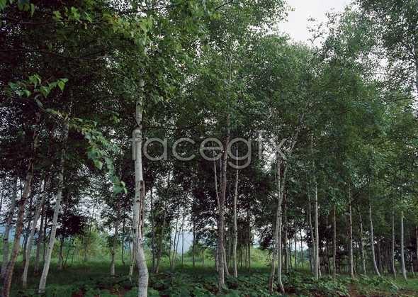 Jungle beauty of 553