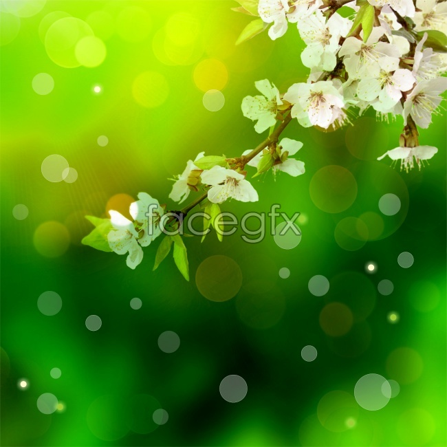 Plum flower green backgrounds pictures