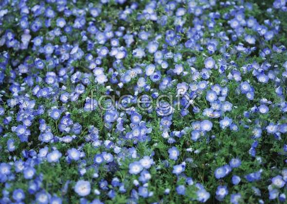 Thousands of flowers 547