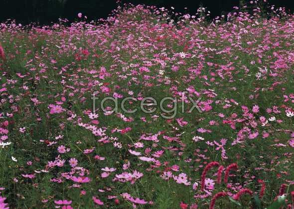 Thousands of flowers 658