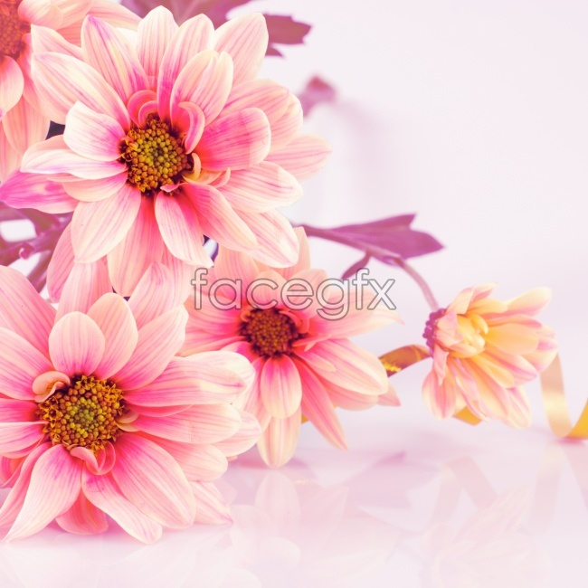 Cute pink flower picture