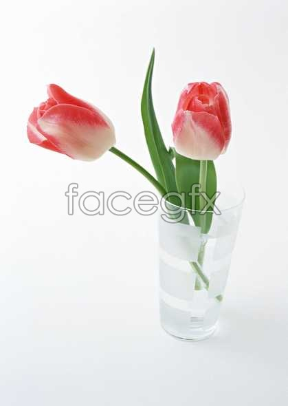 Flowers close-up 1332