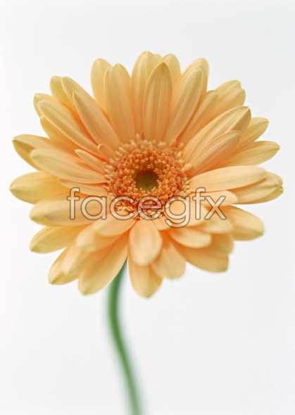 Flowers close-up 1353