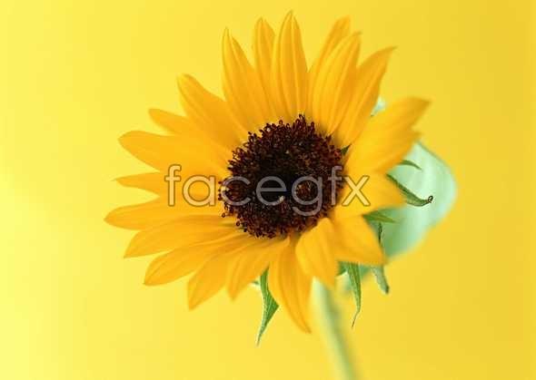 Flowers close-up 1387