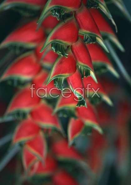 Flowers close-up 2032