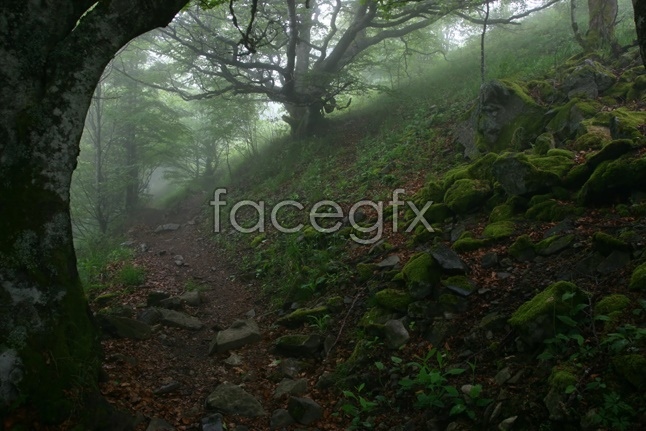Forest scenery picture