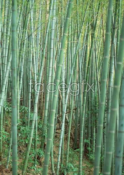 Intricate sprawling bamboo picture