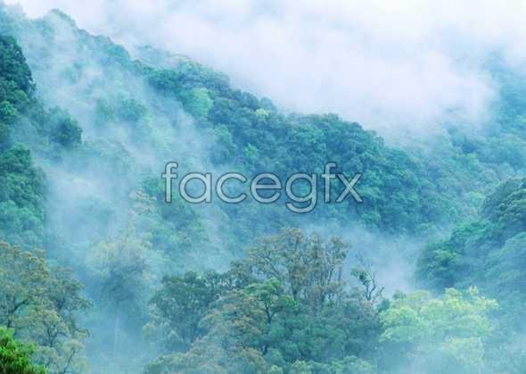 Jungle beauty of 198