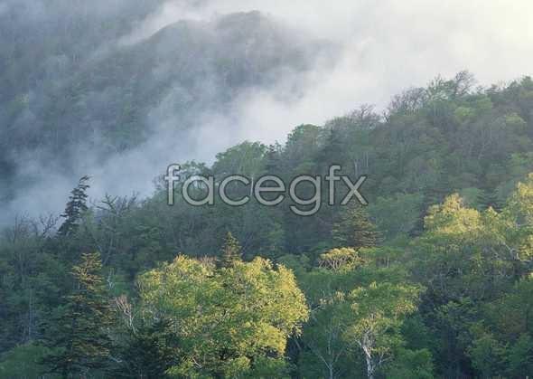 Jungle beauty of 488