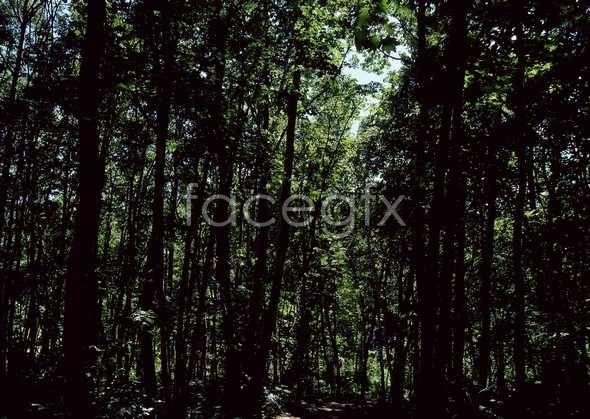 Jungle beauty of 539