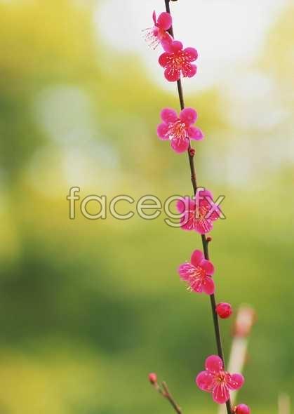 Thousand flower 677