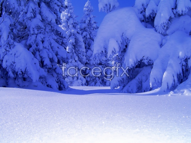 Winter snow picture