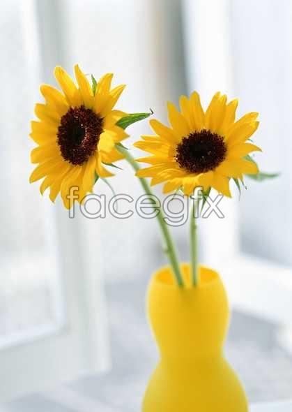 Bottled sunflower