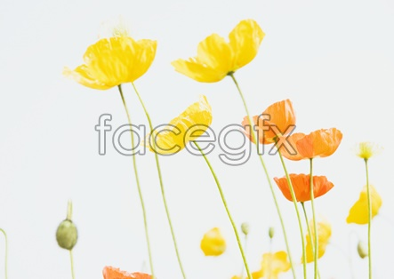 Flower pictures 9