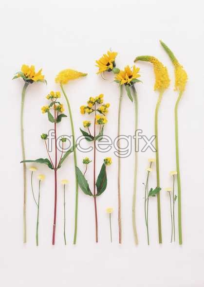 Flowers close-up 1818
