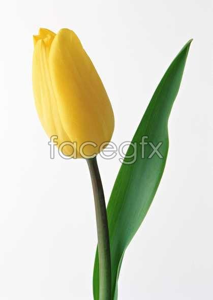 Flowers close-up 506