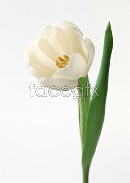 Flowers close-ups 1337