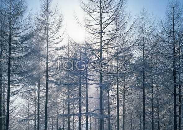 Frozen 495