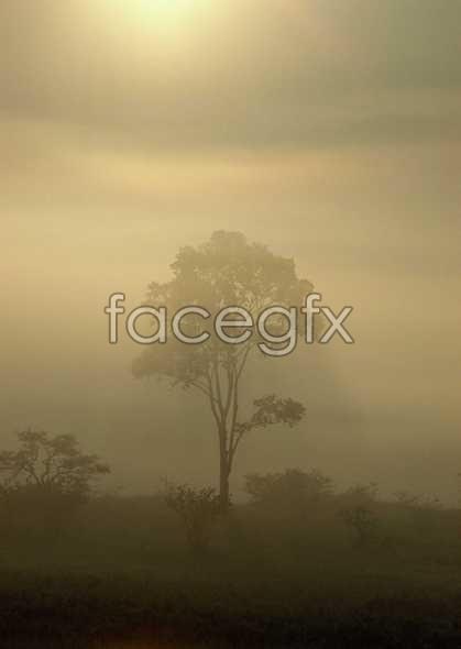 Jungle beauty of 248