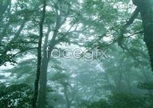 Jungle beauty of 158