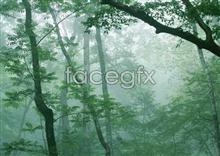 Jungle beauty of 159