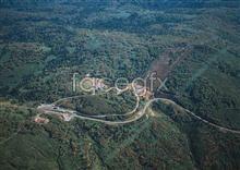 Jungle beauty of 205