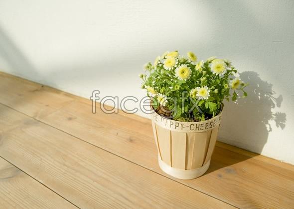 Indoor flower 64