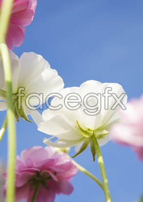Flowers and pictures of 2,122