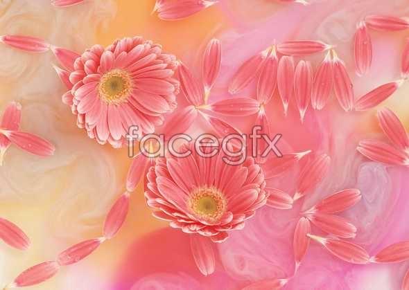 Flowers close-up 1026