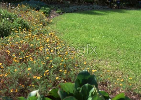Flowers close-up 1215