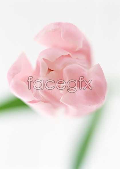 Flowers close-up 1329