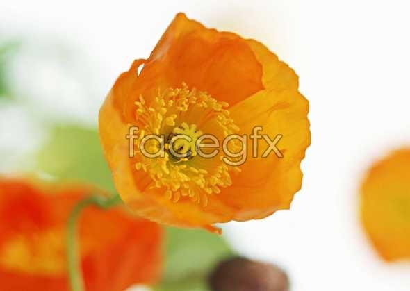 Flowers close-up 1489
