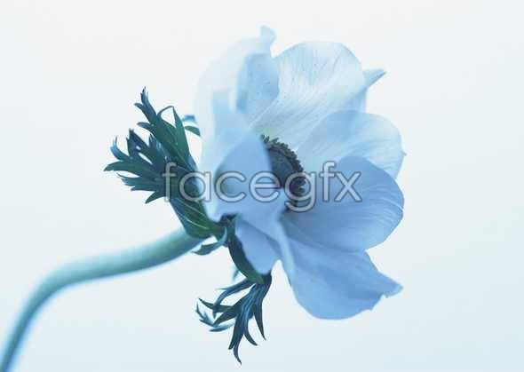 Flowers close-up 1650